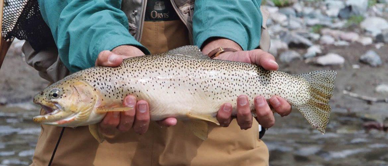 Photo of Fish